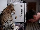 Человек против дикого кота (лещ от котейки)